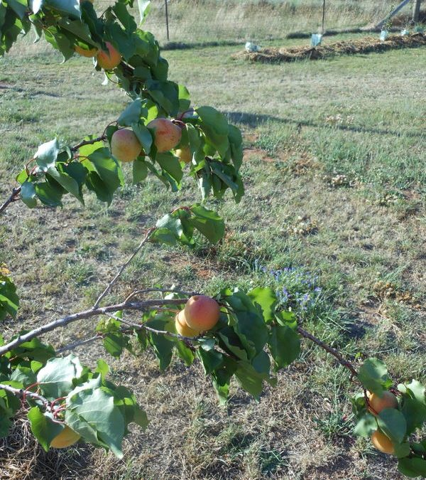 Windy Orchard
