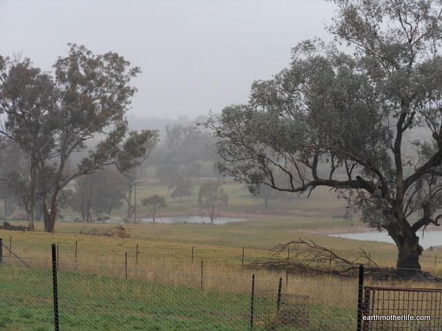 Rain-Finally!