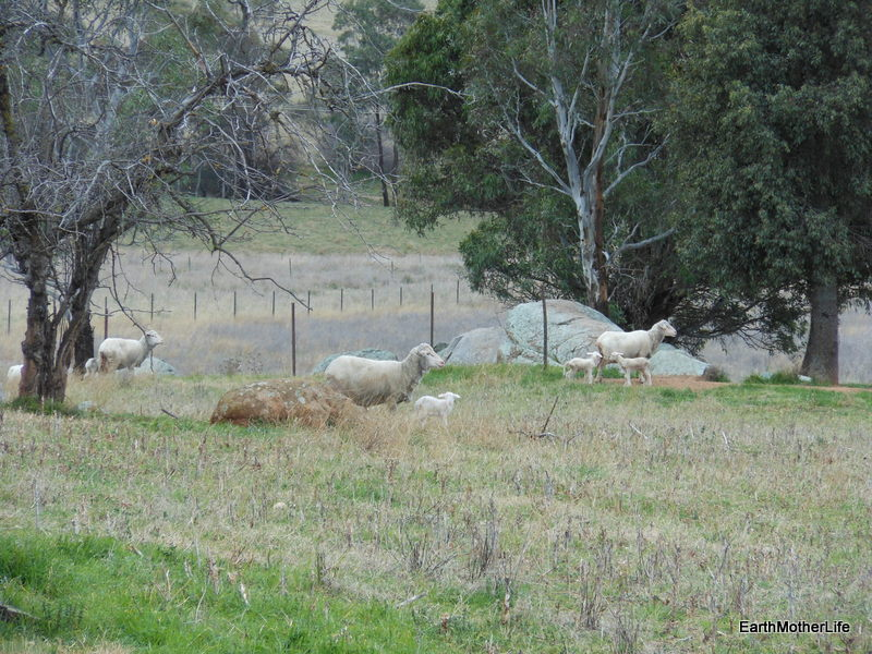 New Life in the Paddocks