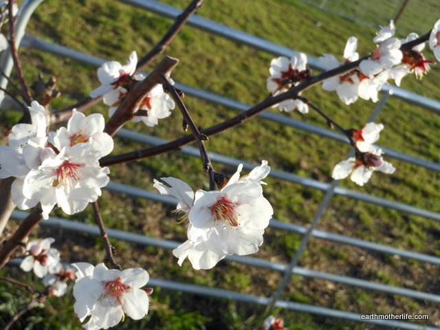 Spring is coming…